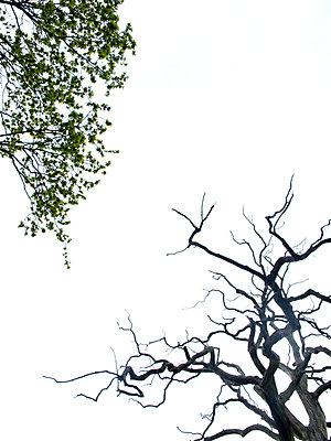 Leben und Tod - p240m892271 von Valerie Wagner