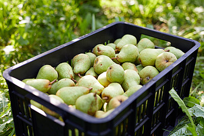 Fruit crate with williams pears - p300m2140982 by Sebastian Dorn