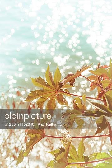 Pflanzen am Ufer im Sonnenschein - p1255m1152848 von Kati Kalkamo