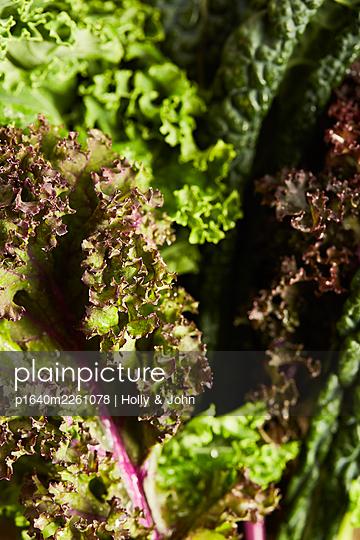 Iceberg lettuce - p1640m2261078 by Holly & John