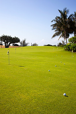 Palm-lined golf course - p304m1093919 by R. Wolf