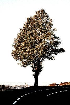 Baum - p8290242 von Régis Domergue