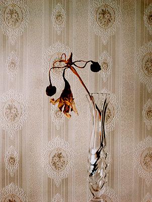 Vase mit verbluehten Blumen - p9790594 von Dahmen
