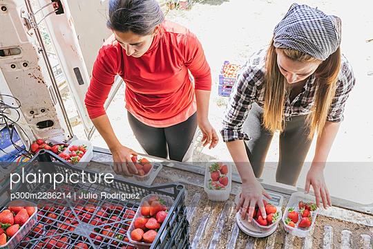 Agriculture work in strawberry field, Huelva, Spain - p300m2286214 von Julio Rodriguez