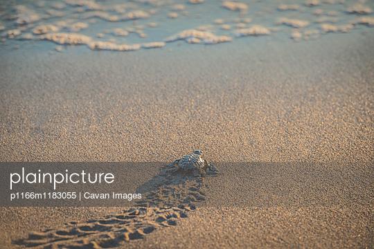 p1166m1183055 von Cavan Images