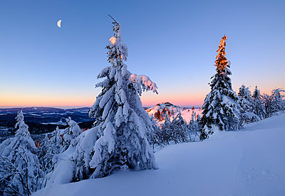 Germany, Bavaria, Bavarian Forest in winter, Great Arber, snow-capped spruces in the morning - p300m1450179 by Martin Siepmann