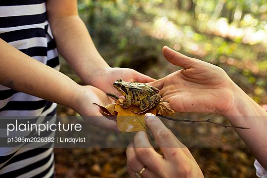 Frosch auf Hand - p1386m2026382 von Lindqvist