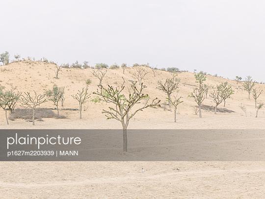 Wüste mit Bäumen - p1627m2203939 von MANN