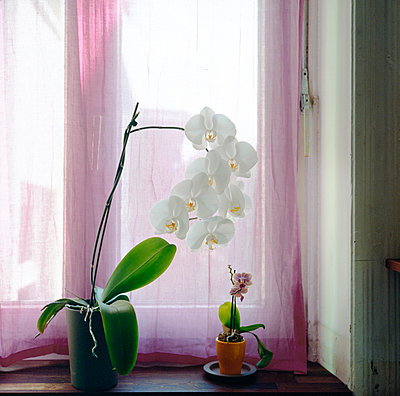 Orchid - p1088m937903 by Martin Benner