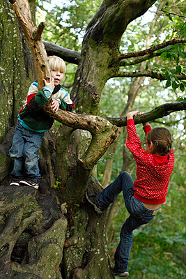Climbing in a tree - p2490781 by Ute Mans