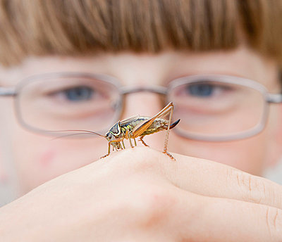 A cricket on the hand of a boy - p30119013f by Sven Hagolani
