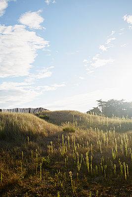 Dünenlandschaft - p464m1193611 von Elektrons 08