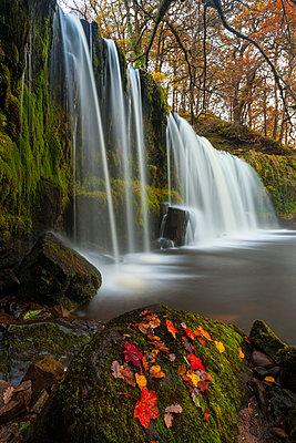 Sqwd Ddwli Waterfall, near Pontneddfechan, Afon Pyrddin, Powys, Brecon Beacons National Park, Wales, United Kingdom, Europe - p871m1106670f by Billy Stock
