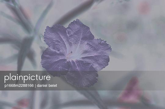 Lilac flower - p1668m2288166 by daniel belet