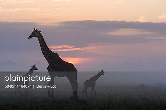 p840m1164074 von Denis-Huot