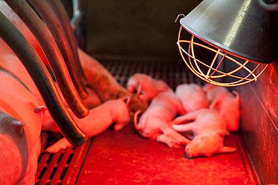 Tierhaltung - p1058m817158 von Fanny Legros