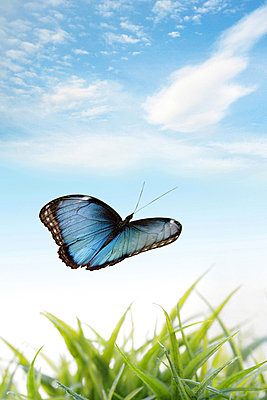 Schmetterlingsromantik - p4500101 von Hanka Steidle