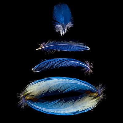 Blaue Federn - p587m1575111 von Spitta + Hellwig