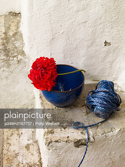 Red geranium with blue bowl and string on whitewashed steps, Spain - p349m2167737 by Polly Wreford