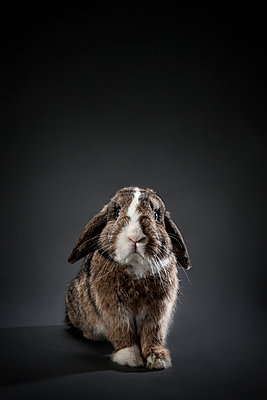 Rabbit - p1156m1016882 by miep
