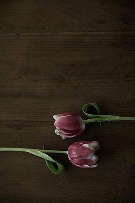 Tulpen - p1432m1492630 von Svetlana Bekyarova