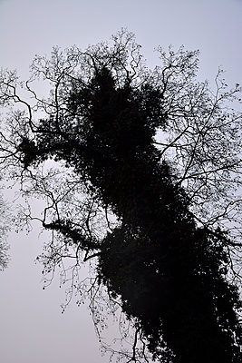 branches and sky - p876m1423561 by ganguin