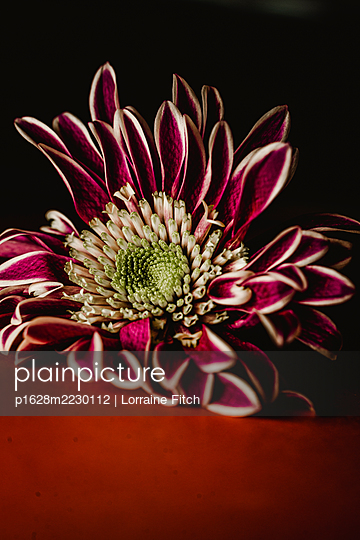Exotic flower - p1628m2230112 by Lorraine Fitch