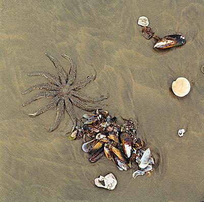 Mussels - p1016m755517 by Jochen Knobloch