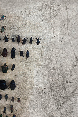 Käfersammlung - p450m949407 von Hanka Steidle