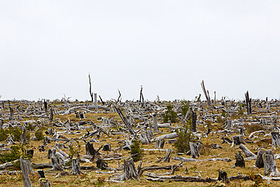Laguna Parrillar National Reserve, Chile - p719m864983 von Rudi Sebastian