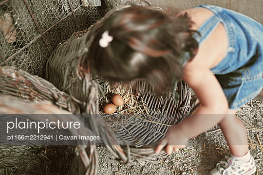 A little girl collecting organic eggs - p1166m2212941 by Cavan Images