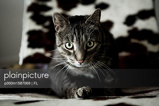 Cat sitting on sofa - p300m1587069 von FL photography