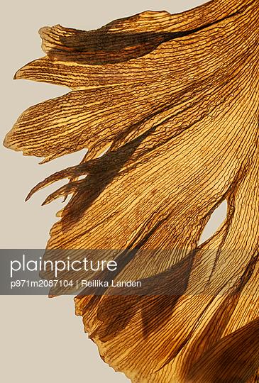 Petal - p971m2087104 by Reilika Landen