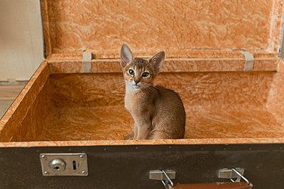 Kitten in the bag - p1476m2027004 by Yulia Artemyeva