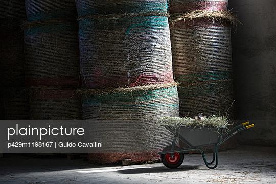 p429m1198167 von Guido Cavallini