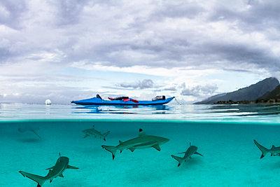 Kayak and a shoal of sharks under it in Tahiti, underwater shot - p1166m2113069 by Cavan Images