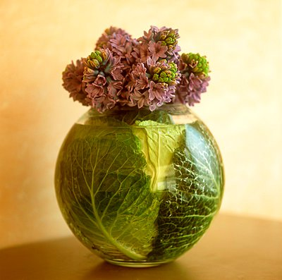 Hyacinths with cabbage leaves in a round vase - p1183m996363 by Paul, Michael