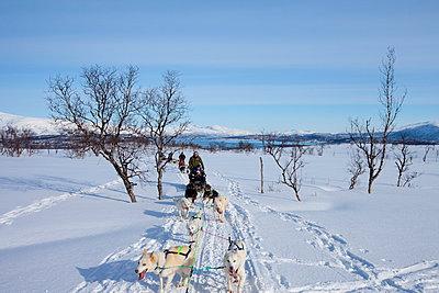 Alaskan Huskies dog-sledding at Villmarkssenter wilderness centre on Kvaloya Island, Tromso in Arctic Circle, Northern Norway - p871m895832 by Tim Graham