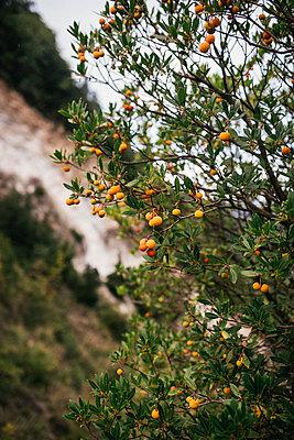 Orange tree - p1046m2053685 by Moritz Küstner