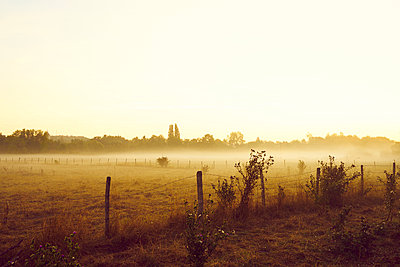 Pasture and fence in the morning fog - p1312m2262367 by Axel Killian