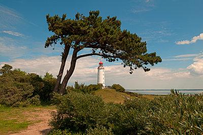 Leuchtturm Dornbusch auf Hiddensee - p470m1465375 von Ingrid Michel