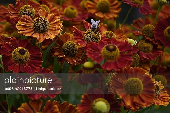 Biene - p096m2015773 von Helga Lorbeer