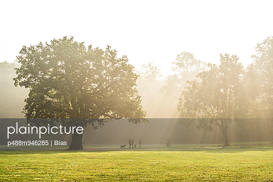 Morning in a park - p488m946285 by Bias