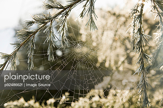 Cobweb - p9248662f by Image Source
