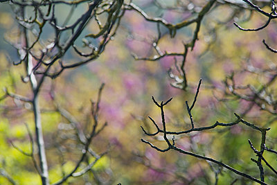 Bare branches - p624m1101467f by Odilon Dimier