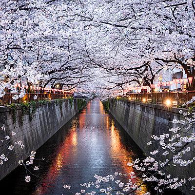 Nakameguro Sakura Festival, Tokyo, Japan - p651m2006322 by Jan Christopher Becke