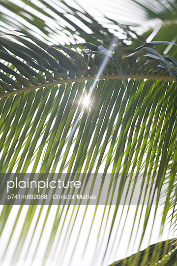 Palmenblatt - p741m892068 von Christof Mattes