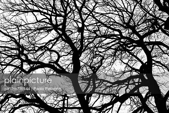 p912m776144 von Paolo Pellegrin