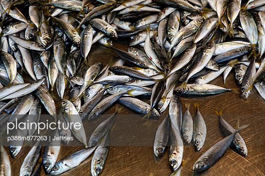 Sardine fish in market - p388m877263 by Jeffries