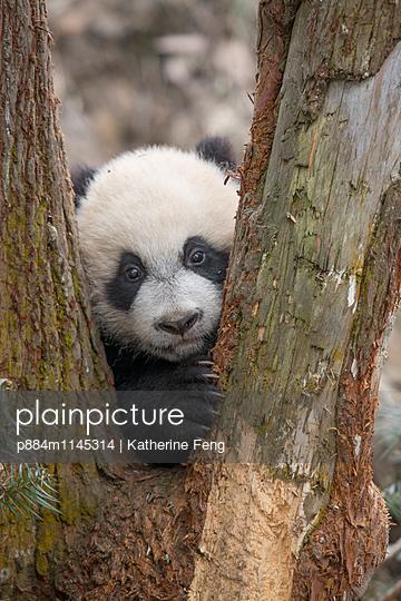 p884m1145314 von Katherine Feng